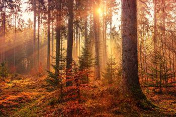 Sunlight through Autumn trees.
